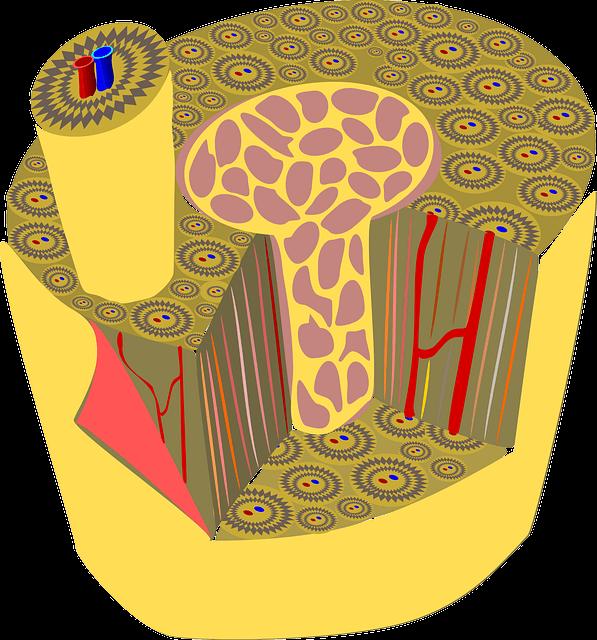Periost Knochen Periostmassage